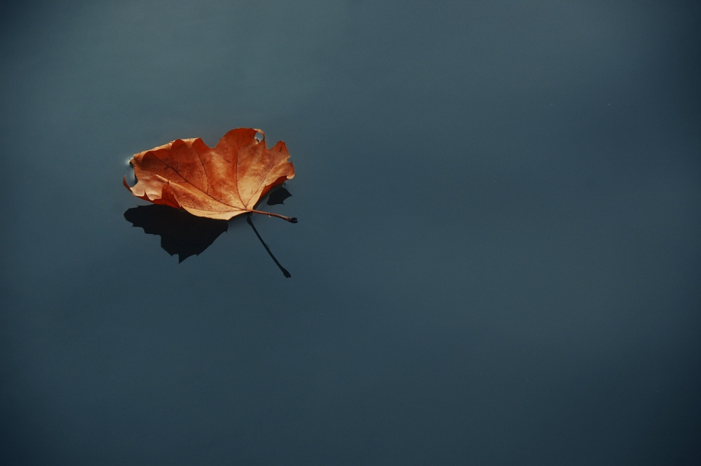 still-water-leaf