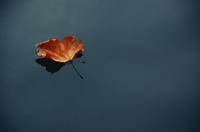 still-water-leaf